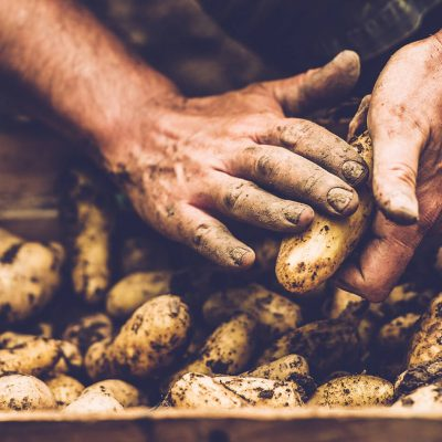 potatoes being picked, close up of hands